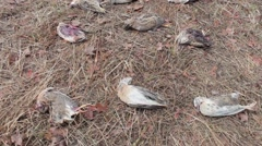 Killed on bird hunting Stock Footage