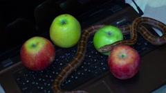 Snake crawls around apple on laptop Stock Footage