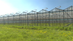 CLOSE UP: Cultivation of young green vegetable seedlings in modern glasshouses Stock Footage