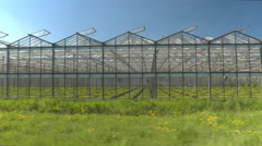 CLOSE UP: Cultivation of young green vegetables and flowers in glasshouses Stock Footage