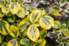 Detail photo of yellow-green leaves, natural scene Stock Photos