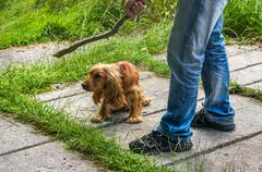 Man holds a stick in hand and he wants to hit the dog - dog abuse - stock photo