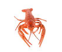 Fresh boiled red crayfish isolated on white background. Stock Photos