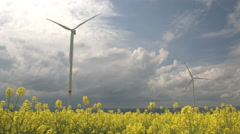 CLOSE UP: Pretty yellow turnip flowers blooming next to big white windmills - stock footage