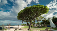 The big tree and the sun loungers on the white sandy beach of Nusa Dua. 4K Stock Footage