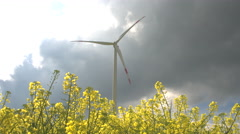 CLOSE UP: Pretty yellow turnip flowers blossoming next to big white windmills Stock Footage