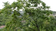 Houses On Hills Of Veliko Tarnovo Stock Footage