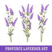 Set of lavender Stock Illustration