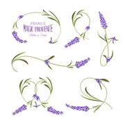 Set of lavender flowers elements - stock illustration
