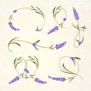 Set of lavender flowers elements Stock Illustration