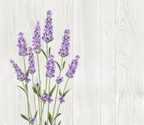 The lavender bouquet - stock illustration