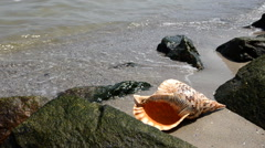 Shell in the sand on the beach with rocks Stock Footage
