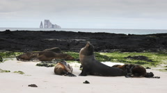 Sea lion and kicker rock at san cristobal in the galapagos Stock Footage