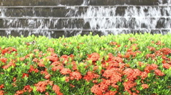 Fountain and bush of red Ixora flower in public garden, thailand Stock Footage
