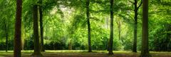 Fresh green forest in dreamy soft light Stock Photos