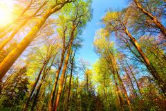 Colorful and sunny forest scenery - stock photo