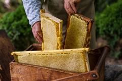 Beekeeper working on bee hive Stock Photos