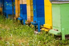 Beehives at apiary Stock Photos