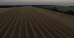 Harvesters tresh wheat aerial view Stock Footage