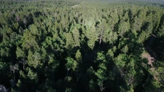 Aerial shot of beautiful tall pine trees on mountain Stock Footage