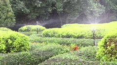 Garden Irrigation Sprinkler watering green bush Stock Footage