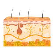 Skin cells Stock Illustration