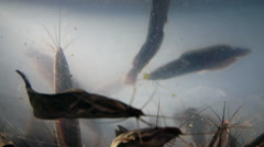 Many catfish in a small aquarium Stock Footage