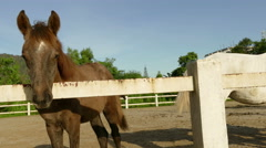 Foal in stable Stock Footage