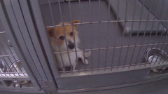 Sad Looking Puppy Dog Eyes At Animal Shelter - Downey CA Stock Footage