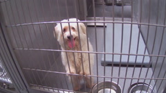 Eager Tail Wagging White Dog Behind Bars At Animal Shelter - Downey CA Stock Footage
