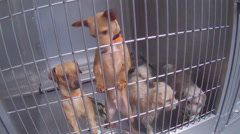 Eager Tail Wagging Puppies At Animal Shelter - Downey CA - stock footage