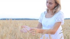 Female hand touching a golden wheat ear in the wheat field Stock Footage