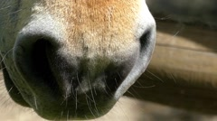 The Nostrils of the Horses Close Up. Slow Motion. Stock Footage