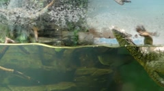 Monitor Lizard Swimming in the Aquarium. Stock Footage