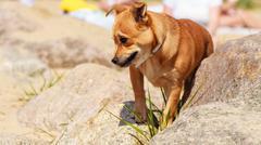 Dog animal pet walking outdoor. Kuvituskuvat