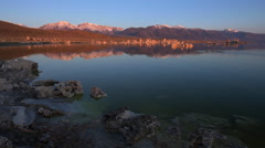 Geese swimming in Mono Lake at Sunrise Stock Footage
