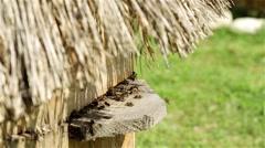 Many beehives. Bee Farm, flying bee. Beehive on a green meadow, beekeeping. Stock Footage