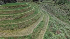 AERIAL SEQUENCE FLY IN & REVERSE TILT COMPARING UNKEMPT TO KEPT RICE TERRACES Stock Footage