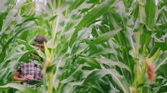 Young farmer working in the field of corn. Learning sprouts, uses tablet Stock Footage
