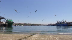 Fishing harbor with fishing boats and seagulls 4k timelapse Stock Footage