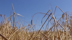 eolic windmill turbine wind renewable energy wheat farm slow motion 120fps - stock footage