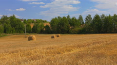 Wheatfield With Sheaves After Harvest Stock Footage