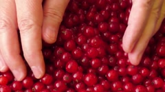 Red currants in a woman's hands Stock Footage