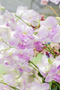 Beautiful orchid (Phalaenopsis) Stock Photos
