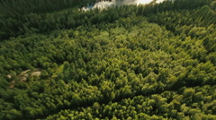 Aerial Shot of River Surrounded by Large Pine Forest in Northern Europe Stock Footage