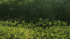 Aerial Shot of Large Pine Forest in Northern Europe - stock footage