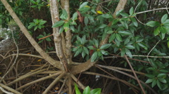 Mangrove forest in eastern bay of Thailand Stock Footage