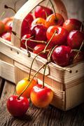 Freshly harvested cherrie. Stock Photos