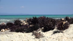 Pile of sea urchins on the Aegean shore. Chalkidiki, Greece. Stock Footage