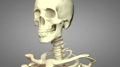 Skeleton rotation with Alpha Cannel1 Stock Footage